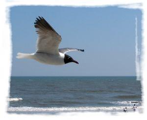 794058_sea_gull.jpg
